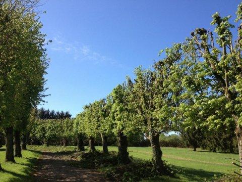 Création de jardin par paysagiste à Lurcy-Lévis