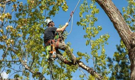 Entreprise professionnelle pour l'élagage d'arbre de plus de 15 m