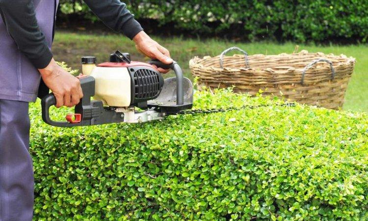 Respect Nature Lurcy-Lévis - Entretien de jardin et espaces verts